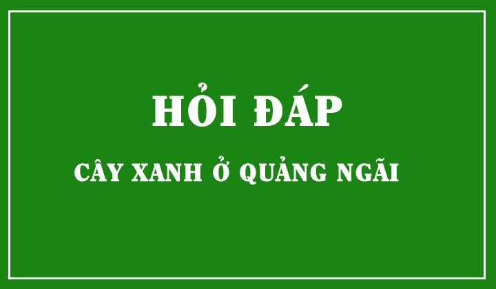 hoi-dap-cay-xanh-o-quang-ngai