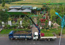 đơn vị cung cấp cây dự án tại Quảng Ngãi