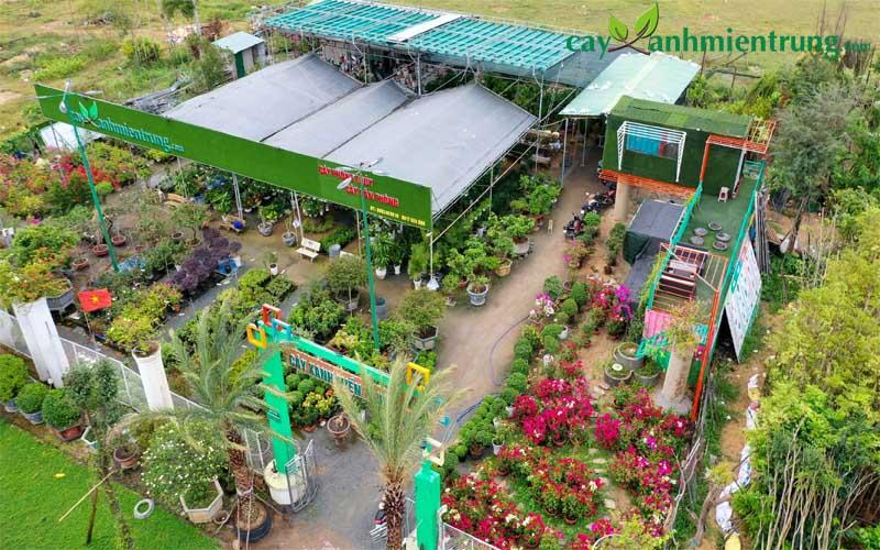 bán cây công trình tại Quảng Ngãi