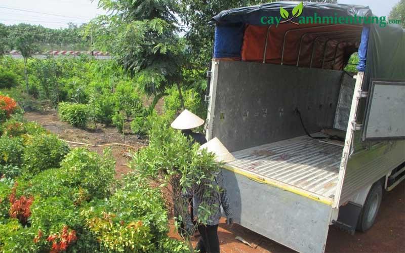 Một số loại cây xanh tại công ty cảnh quan Tâm Việt