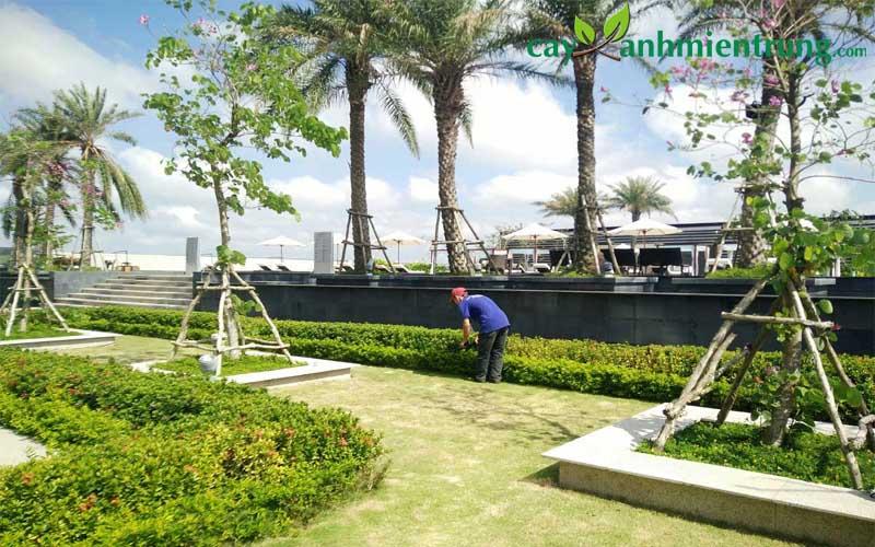 Dịch vụ bảo dưỡng cây công trình tại TMC