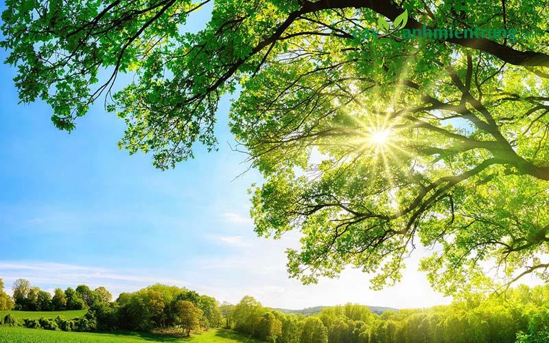 Dự án cây công trình mang đến giá trị về môi trường và sinh thái