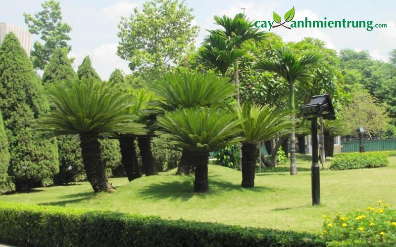 Cho thuê cây xanh đẹp, sức sống khỏe, giá thành tốt