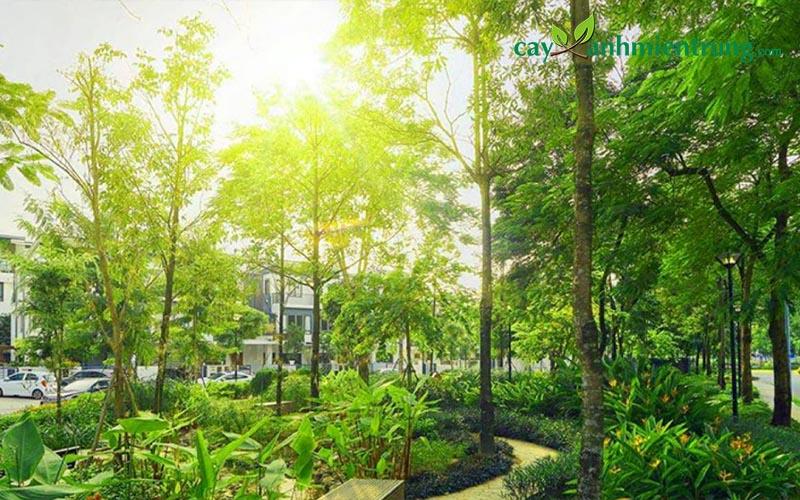 Những nguồn lợi từ các dự án trồng cây công trình