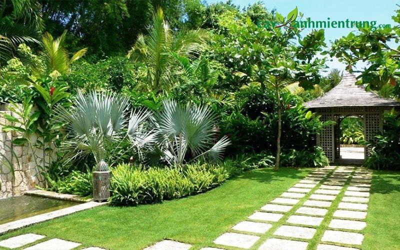 Đẩy lùi tình trạng thời tiết xấu tốt nhất với cây xanh